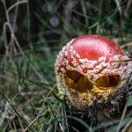 Pilzzeit ist Fotografierzeit – oder?