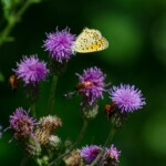 Königreiche für Schmetterlinge